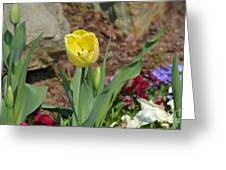 Sunny Yellow Tulips Series  Picture C Greeting Card