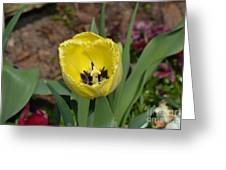 Sunny Yellow Tulips Series  Picture D Greeting Card
