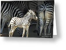 Sunny Zebra Greeting Card