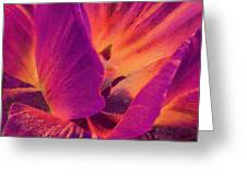 Sunray Flower Abstract Greeting Card