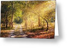 Sunray In The Autumn Forest Greeting Card