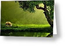 Sunrays In An Ireland Sheep Pasture  Greeting Card