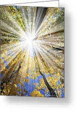 Sunrays In The Forest Greeting Card
