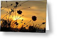 Sunrise 365 28 Greeting Card