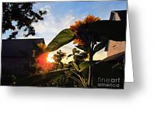 Sunrise 365 29 Greeting Card