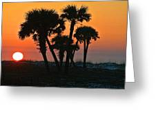 Sunrise And Group Of Palm Trees Greeting Card