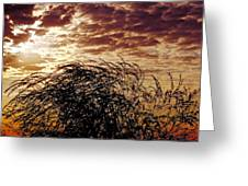 Sunrise And Lacy  Tree Greeting Card
