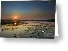 Sunrise And Water Lilies Greeting Card
