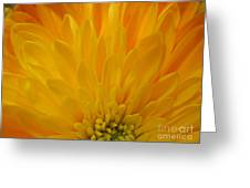 Sunrise Dahlia Abstract Greeting Card