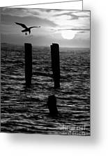 Sunrise Descent Bw - Outer Banks Ocracoke Greeting Card