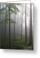 Sunrise Fog Greeting Card by Melissa Petrey
