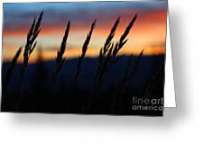 Sunrise From Mt. Elbert Greeting Card by Kate Avery
