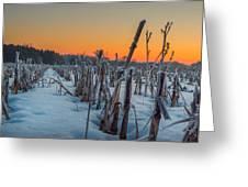 Sunrise Greeting Card by Garvin Hunter