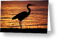 Sunrise Heron Greeting Card