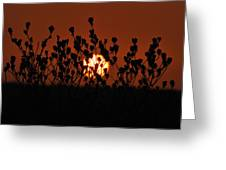 Sunrise In South Texas Greeting Card