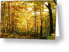 Sunrise In The Forest Greeting Card by James Hammen