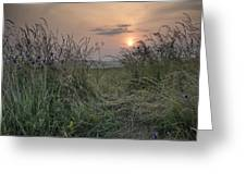 Sunrise Landscape In Summer Looking Through Wild Thistles And Gr Greeting Card