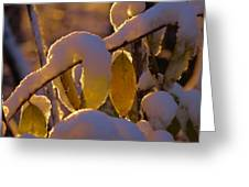 Sunrise On Autumn Snow Greeting Card