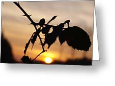 Sunrise On Cold Morning Greeting Card
