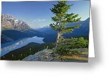1m3608-sunrise On Peyto Lake Greeting Card