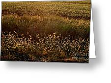 Sunrise On Wild Grass Greeting Card