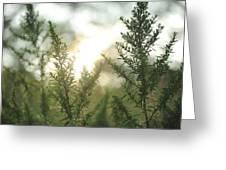 Sunrise Over Greenery Greeting Card