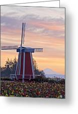 Sunrise Over Wooden Shoe Tulip Farm And Greeting Card