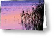 Sunrise Reeds Greeting Card