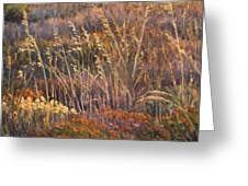 Sunrise Reflections On Dried Grass Greeting Card