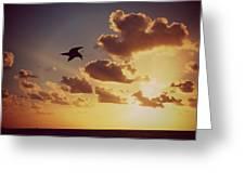 Sunrise Seagull Greeting Card