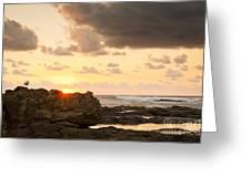 Sunrise Seagull On Rocks Greeting Card