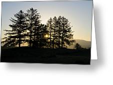 Sunrise Shines Through The Pines Greeting Card