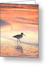 Sunrise Shorebird Greeting Card