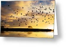 Birds Awaken At Sunrise Greeting Card