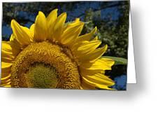 Sunrise Sunflower Greeting Card