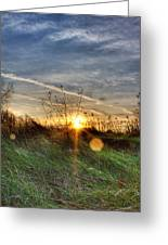 Sunrise Through Grass Greeting Card by Tim Buisman
