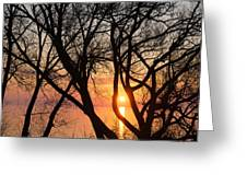 Sunrise Through The Chaos Of Willow Branches Greeting Card