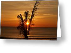 Sunrise Through The Palm Greeting Card
