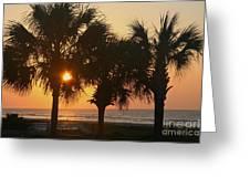 Sunrise Through The Palms Greeting Card
