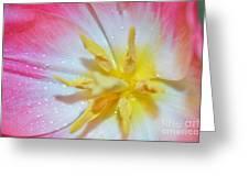 Sunrise Tulip Greeting Card