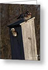 Sunrise Woodies Greeting Card