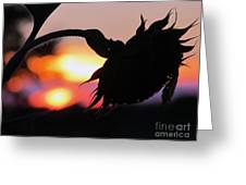 Sunset 365 19 Greeting Card