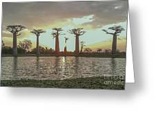 Sunset And Baobab Trees Greeting Card