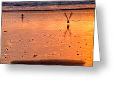Sunset And Birds Greeting Card