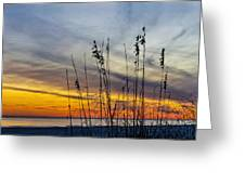 Sunset And Grasses Greeting Card