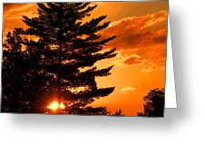 Sunset And Pine Tree  Greeting Card