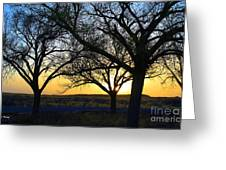 Sunset And Trees Greeting Card