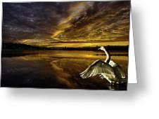 Sunset At Swan Lake  Greeting Card