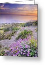 Sunset At The Beach  Flowers On The Sand Greeting Card