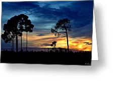 Sunset Behind The Trees Greeting Card